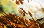 Autumn-001